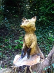 Fox Wood Sculpture on NCN Route 5 in Blacon