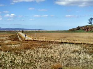 Cyclist on Boardwalk Across Burton Point Marshes