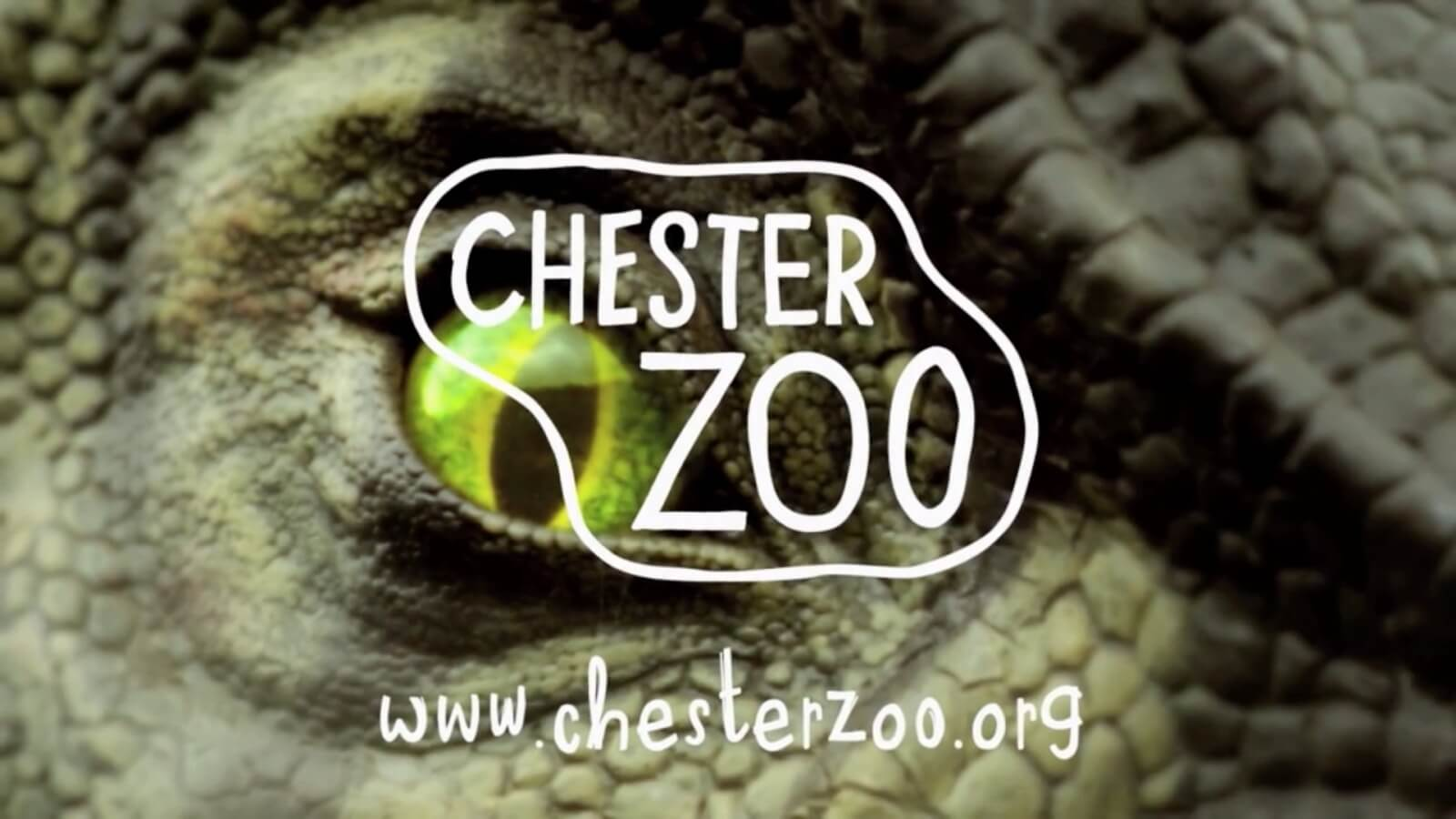 The Zoo Circular Chester Cycling Campaign
